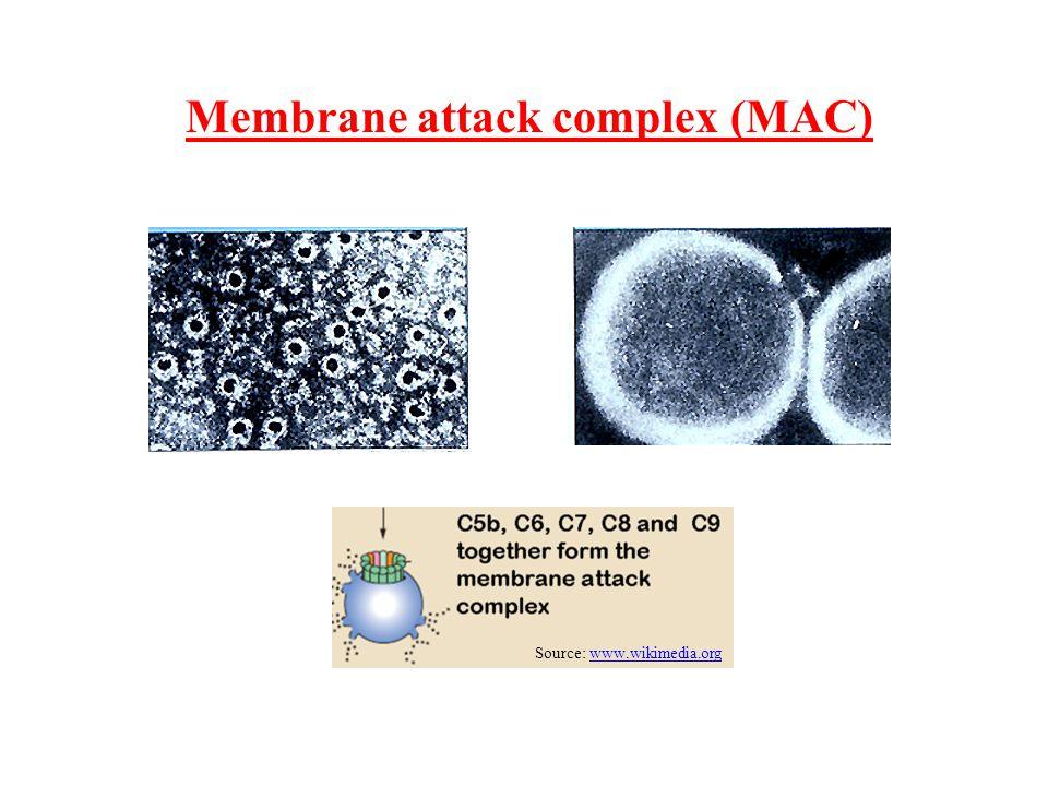 Membrane attack complex (MAC)