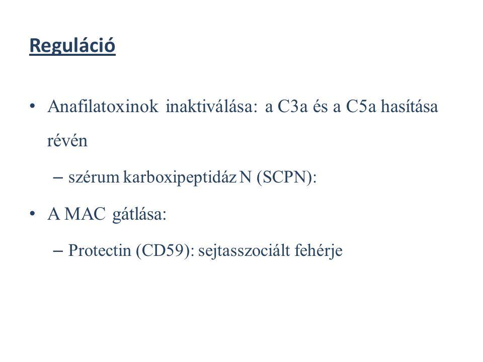 Reguláció Anafilatoxinok inaktiválása: a C3a és a C5a hasítása révén