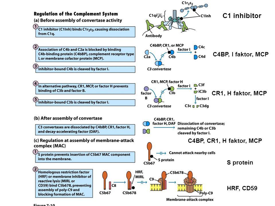 C1 inhibitor C4BP, I faktor, MCP CR1, H faktor, MCP