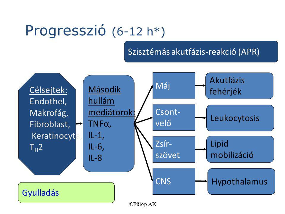 Progresszió (6-12 h*) Szisztémás akutfázis-reakció (APR) Célsejtek: