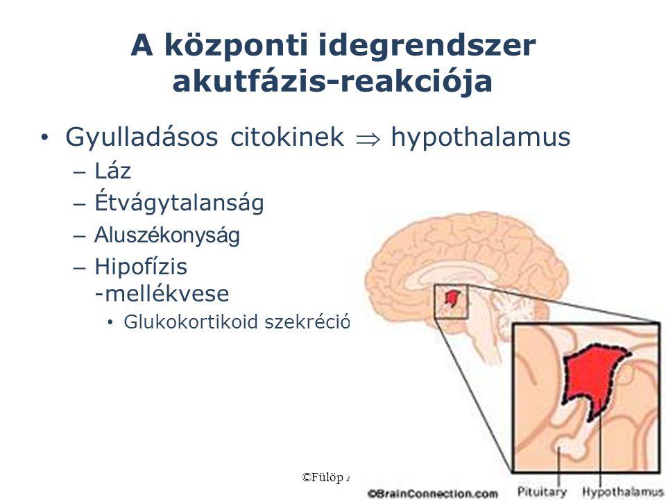 A központi idegrendszer akutfázis-reakciója