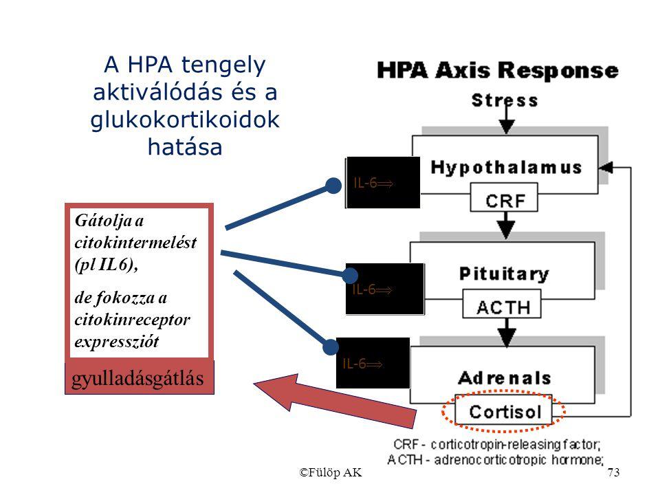 A HPA tengely aktiválódás és a glukokortikoidok hatása