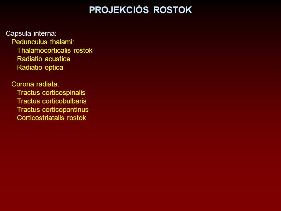 PROJEKCIÓS ROSTOK Capsula interna: Pedunculus thalami: