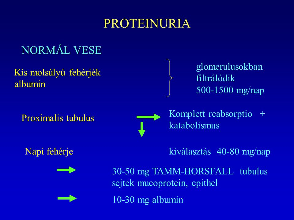 PROTEINURIA NORMÁL VESE Kis molsúlyú fehérjék albumin