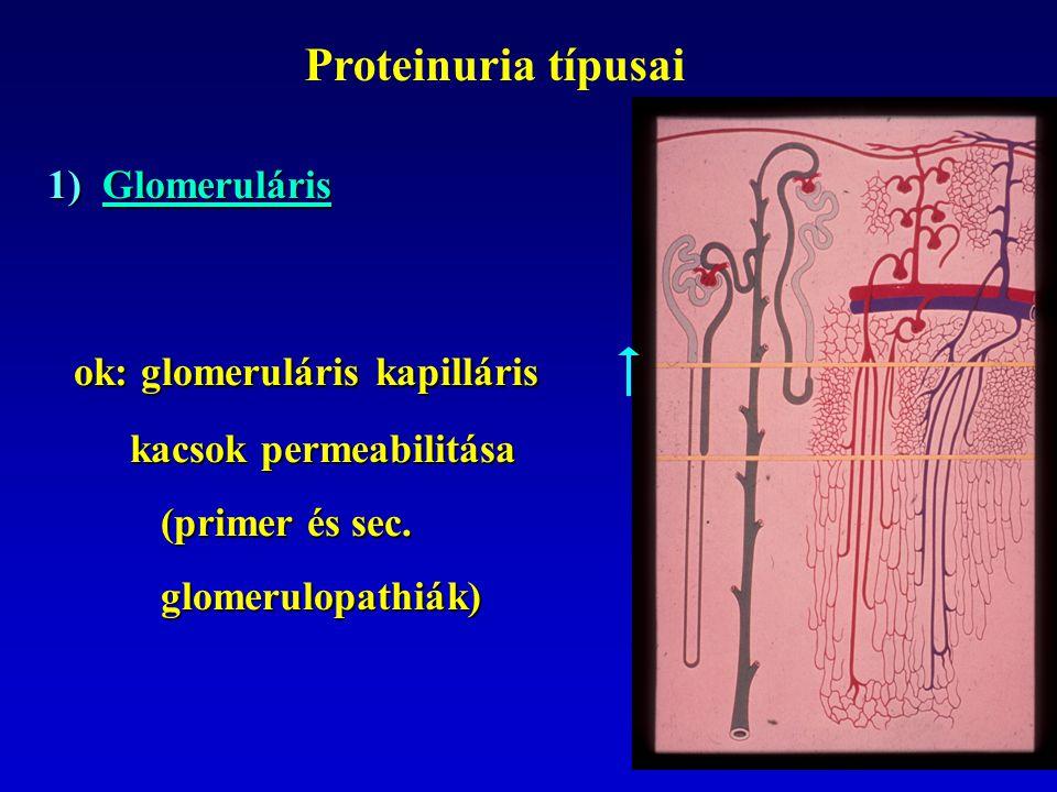 ok: glomeruláris kapilláris