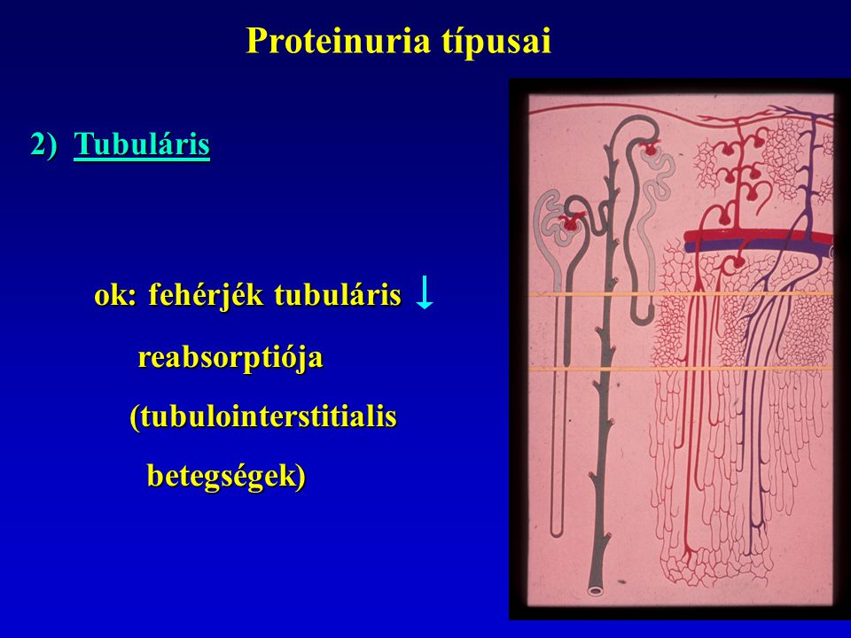 ok: fehérjék tubuláris