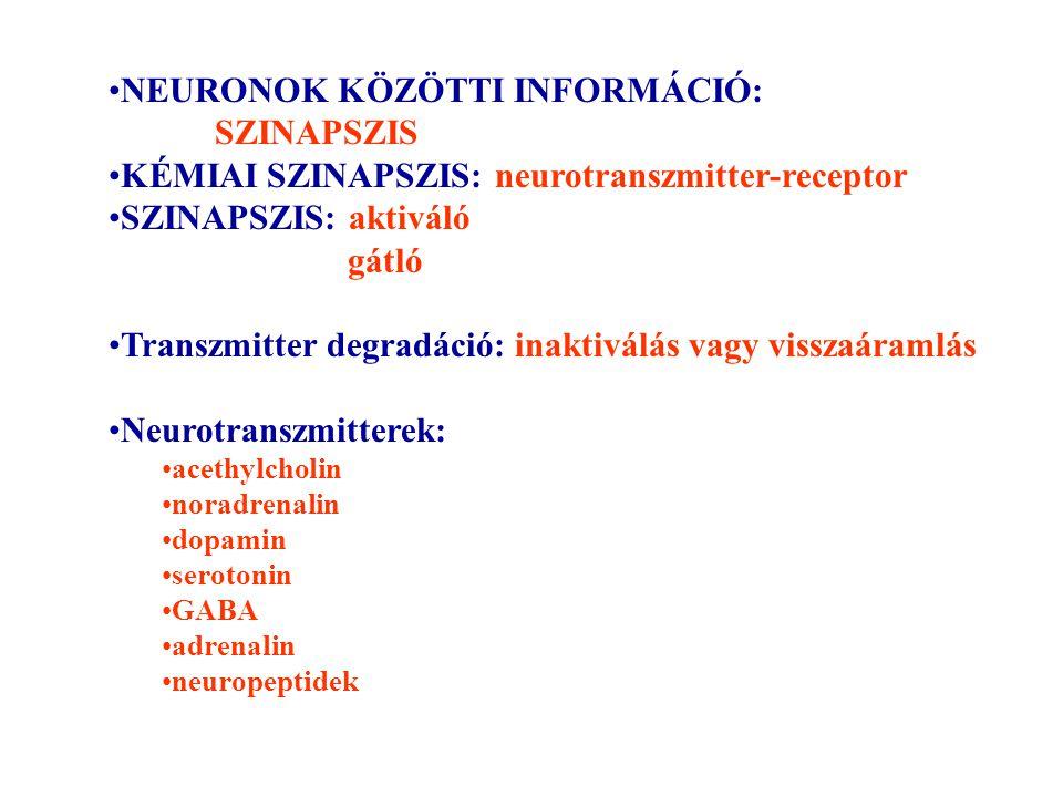 NEURONOK KÖZÖTTI INFORMÁCIÓ: SZINAPSZIS