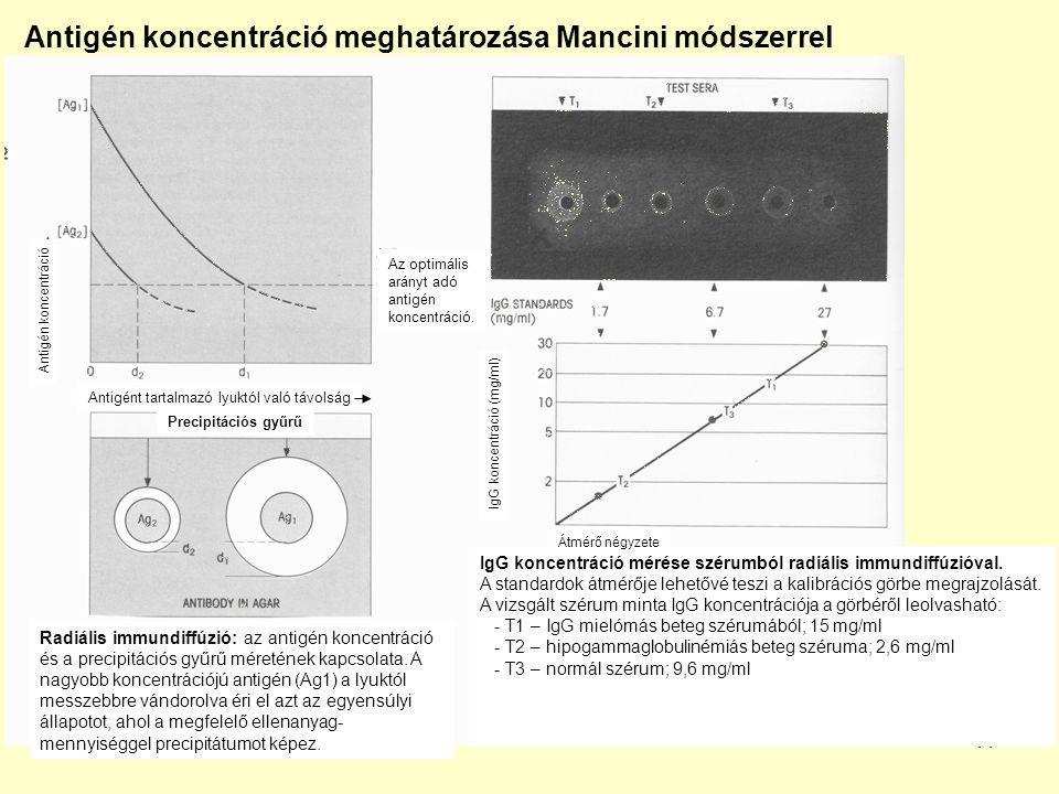 Antigén koncentráció meghatározása Mancini módszerrel