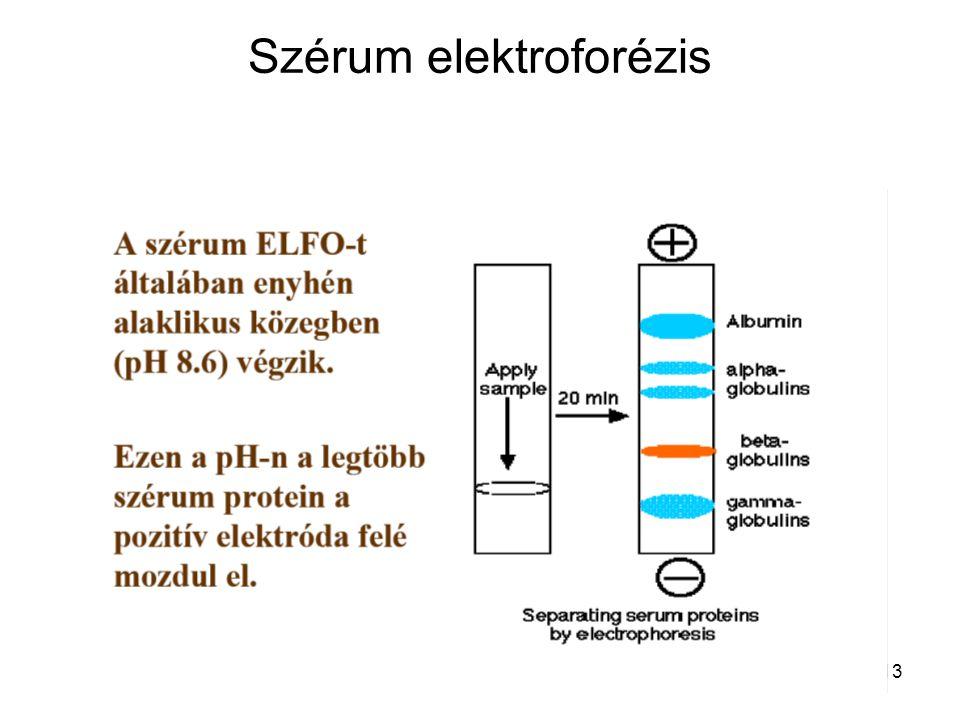Szérum elektroforézis