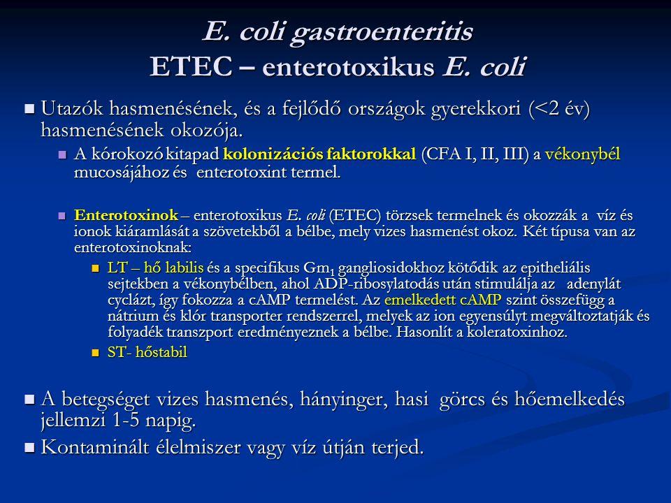 E. coli gastroenteritis ETEC – enterotoxikus E. coli