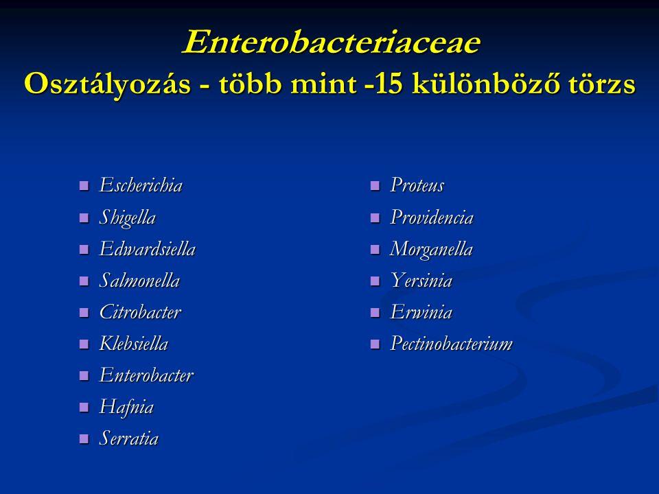 Enterobacteriaceae Osztályozás - több mint -15 különböző törzs