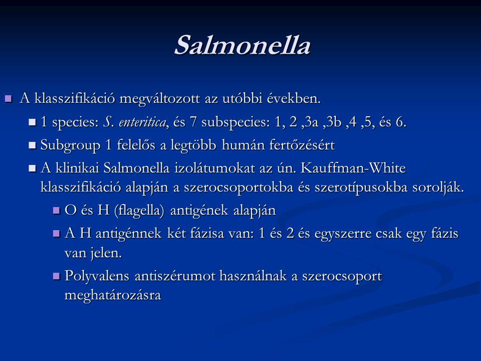 Salmonella A klasszifikáció megváltozott az utóbbi években.