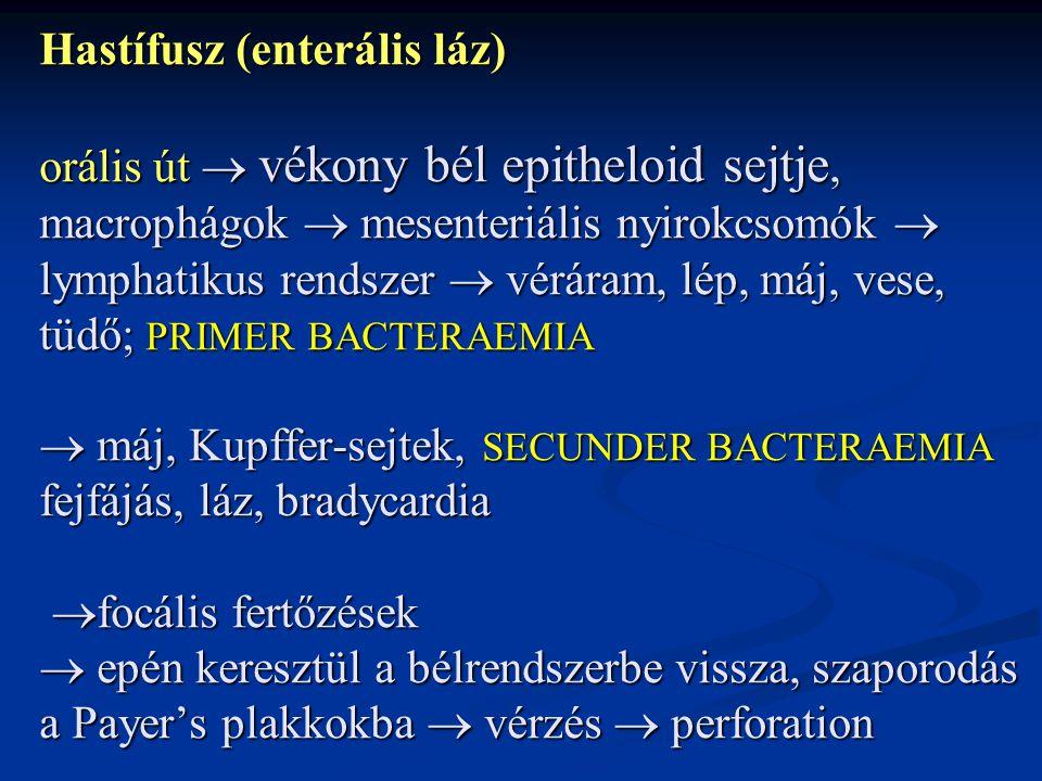 Hastífusz (enterális láz) orális út  vékony bél epitheloid sejtje, macrophágok  mesenteriális nyirokcsomók  lymphatikus rendszer  véráram, lép, máj, vese, tüdő; PRIMER BACTERAEMIA  máj, Kupffer-sejtek, SECUNDER BACTERAEMIA fejfájás, láz, bradycardia focális fertőzések  epén keresztül a bélrendszerbe vissza, szaporodás a Payer's plakkokba  vérzés  perforation