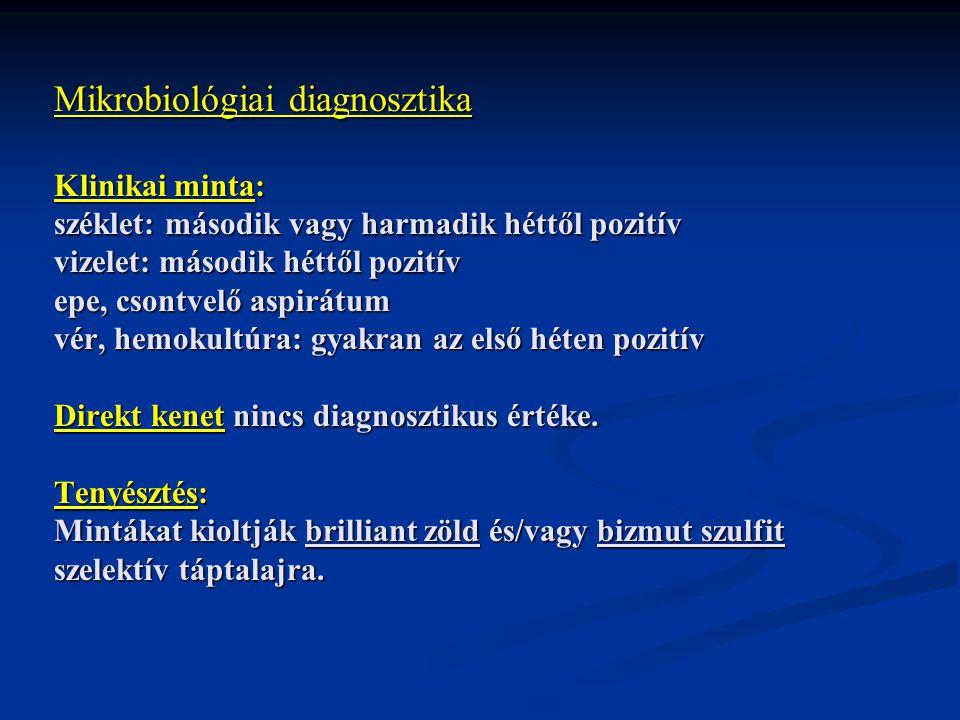 Mikrobiológiai diagnosztika Klinikai minta: széklet: második vagy harmadik héttől pozitív vizelet: második héttől pozitív epe, csontvelő aspirátum vér, hemokultúra: gyakran az első héten pozitív Direkt kenet nincs diagnosztikus értéke.
