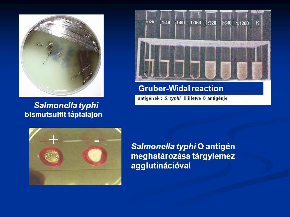 + - Gruber-Widal reaction Salmonella typhi bismutsulfit táptalajon