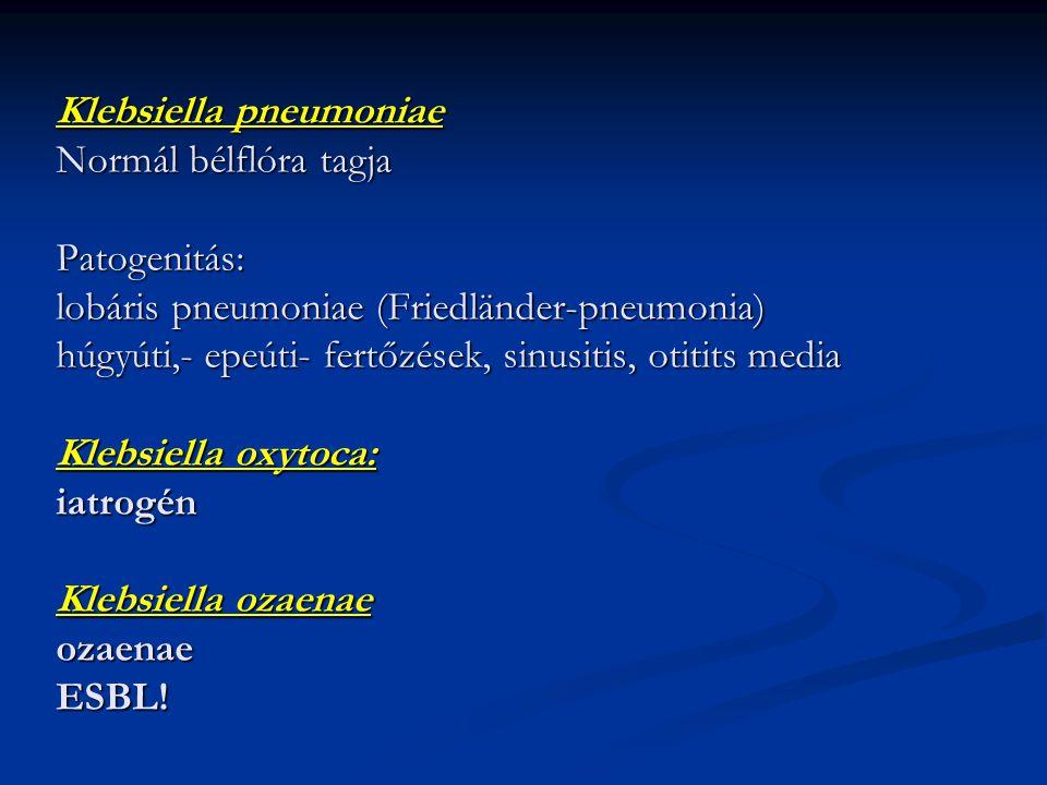 Klebsiella pneumoniae Normál bélflóra tagja Patogenitás: lobáris pneumoniae (Friedländer-pneumonia) húgyúti,- epeúti- fertőzések, sinusitis, otitits media Klebsiella oxytoca: iatrogén Klebsiella ozaenae ozaenae ESBL!