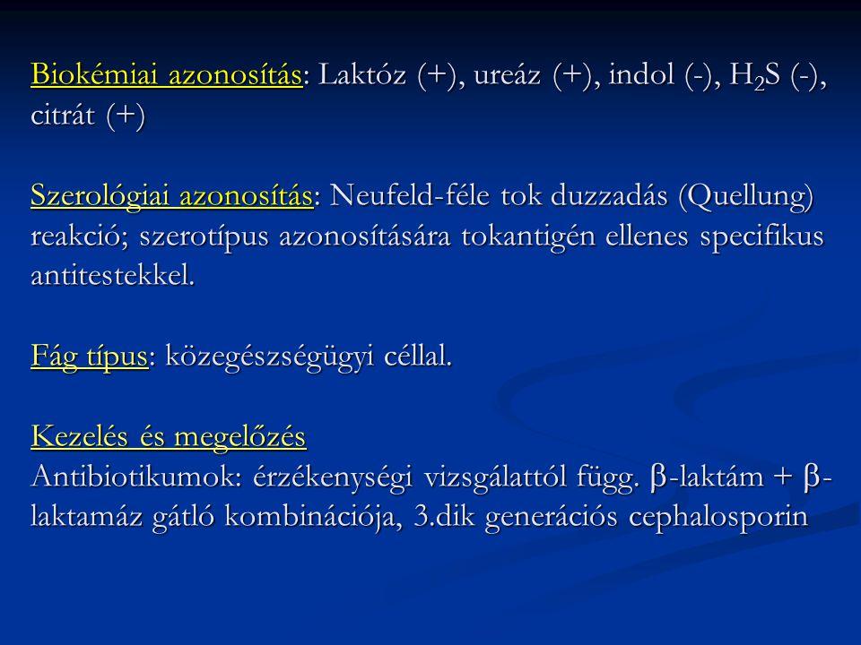 Biokémiai azonosítás: Laktóz (+), ureáz (+), indol (-), H2S (-), citrát (+) Szerológiai azonosítás: Neufeld-féle tok duzzadás (Quellung) reakció; szerotípus azonosítására tokantigén ellenes specifikus antitestekkel.