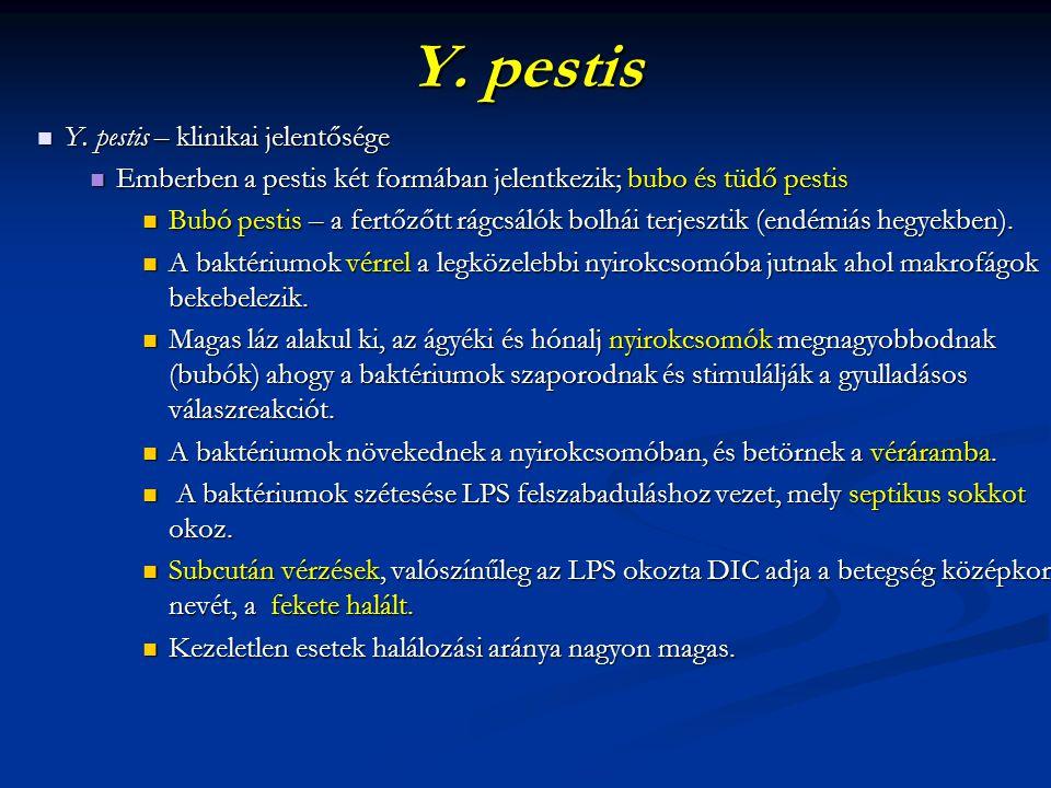 Y. pestis Y. pestis – klinikai jelentősége