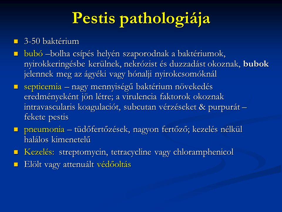 Pestis pathologiája 3-50 baktérium