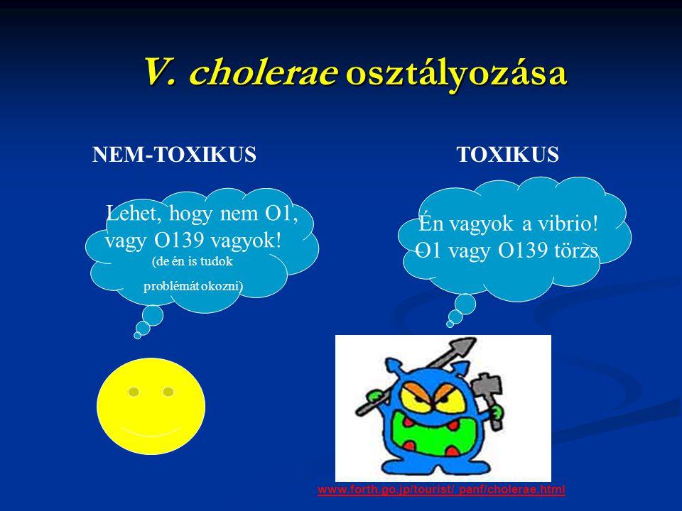 V. cholerae osztályozása