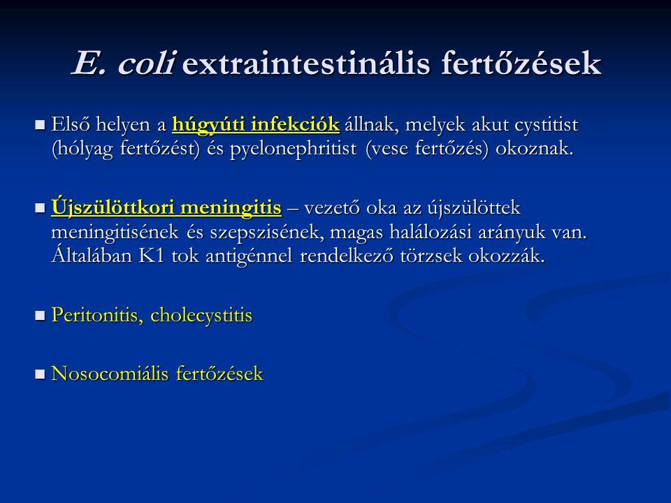 E. coli extraintestinális fertőzések