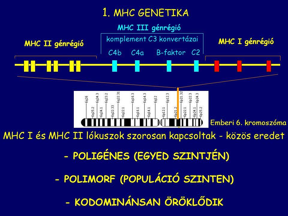 - POLIGÉNES (EGYED SZINTJÉN) - POLIMORF (POPULÁCIÓ SZINTEN)