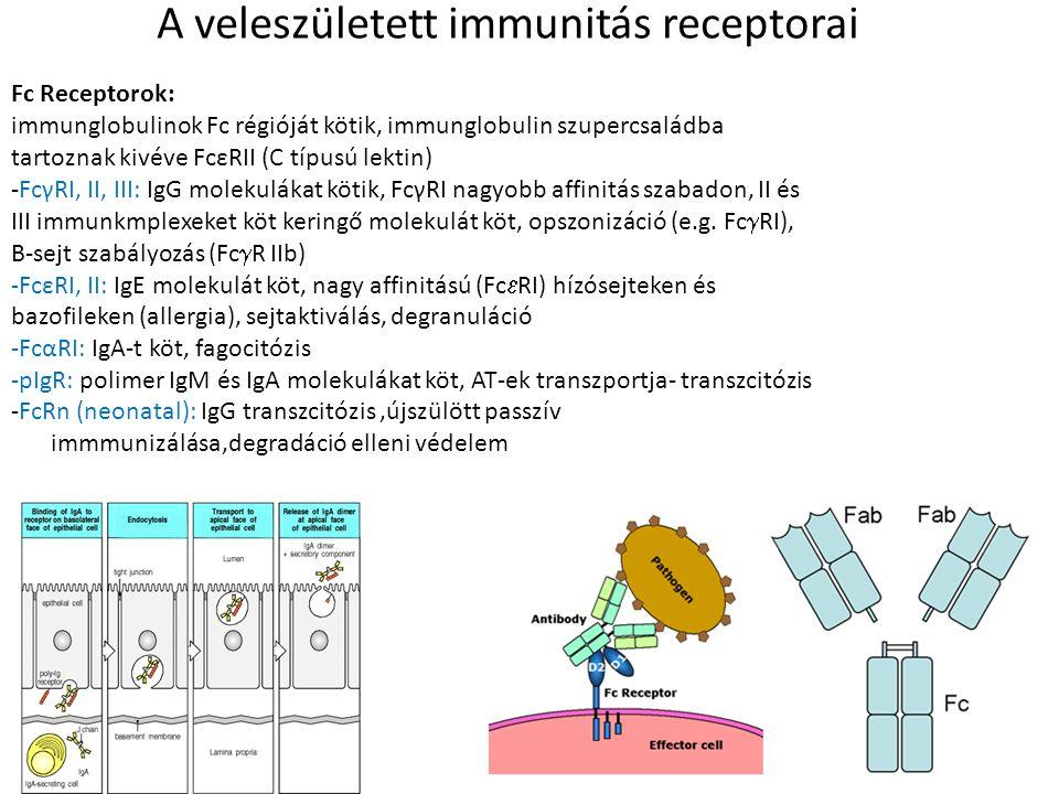 A veleszületett immunitás receptorai