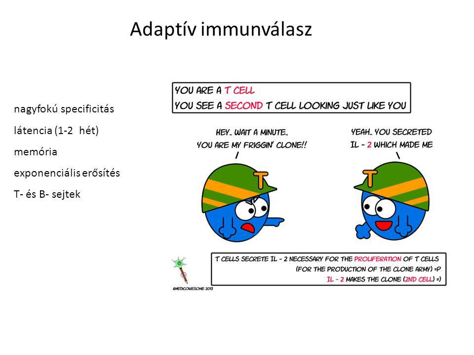 Adaptív immunválasz nagyfokú specificitás látencia (1-2 hét) memória