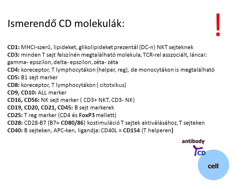 ! Ismerendő CD molekulák: