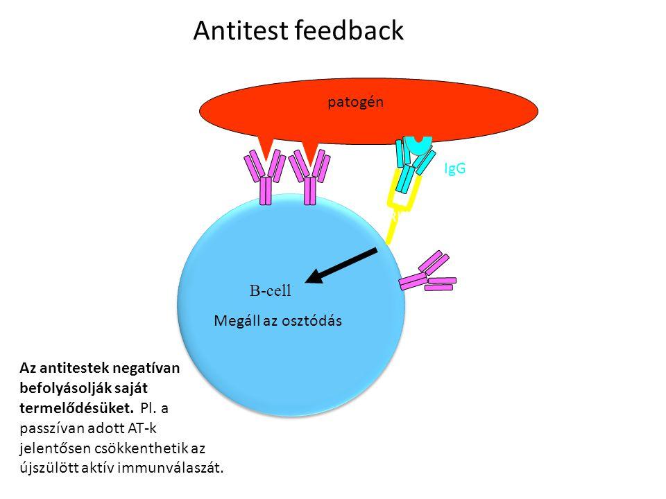 Antitest feedback patogén IgG FcRIIb (ITIM motívummal) B-cell