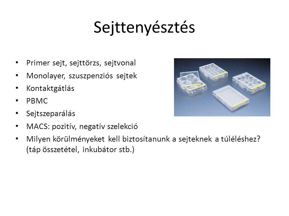 Sejttenyésztés Primer sejt, sejttörzs, sejtvonal