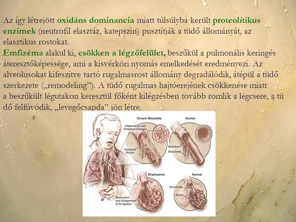 Az így létrejött oxidáns dominancia miatt túlsúlyba került proteolítikus enzimek (neutrofil elasztáz, katepszin) pusztítják a tüdő állományát, az elasztikus rostokat.