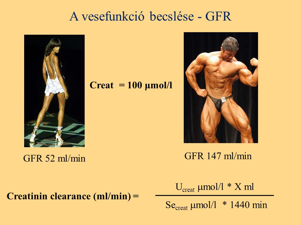 A vesefunkció becslése - GFR