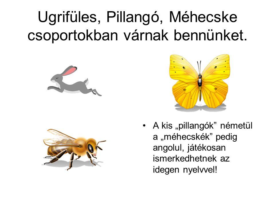 Ugrifüles, Pillangó, Méhecske csoportokban várnak bennünket.