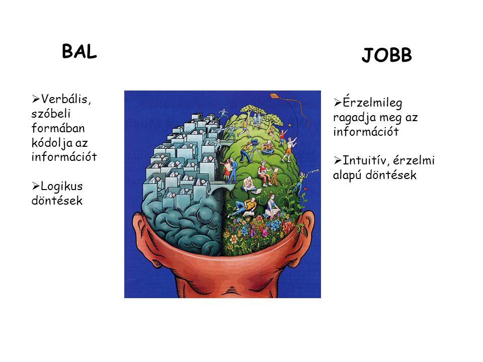 BAL JOBB Verbális, szóbeli formában kódolja az információt