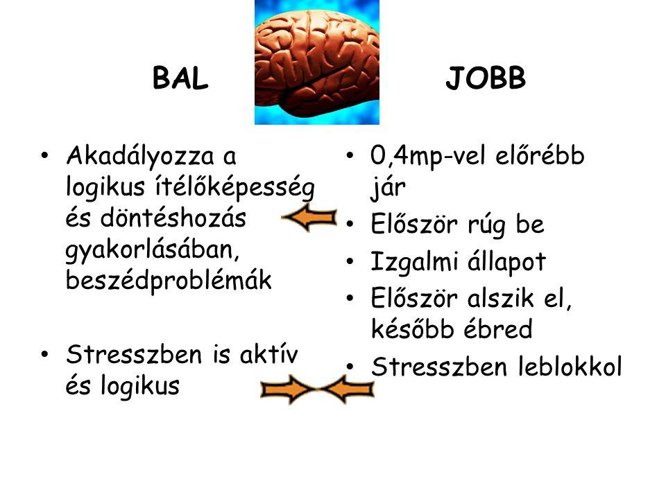 BAL Akadályozza a logikus ítélőképesség és döntéshozás gyakorlásában, beszédproblémák. Stresszben is aktív és logikus.