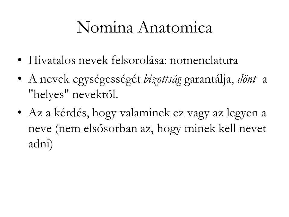 Nomina Anatomica Hivatalos nevek felsorolása: nomenclatura