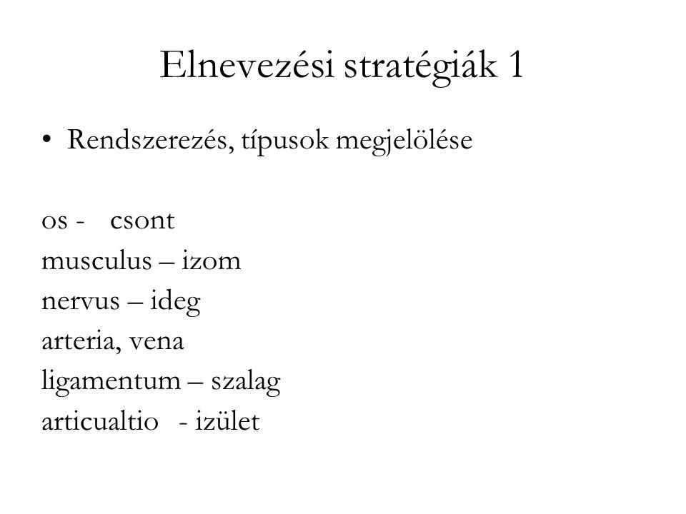 Elnevezési stratégiák 1