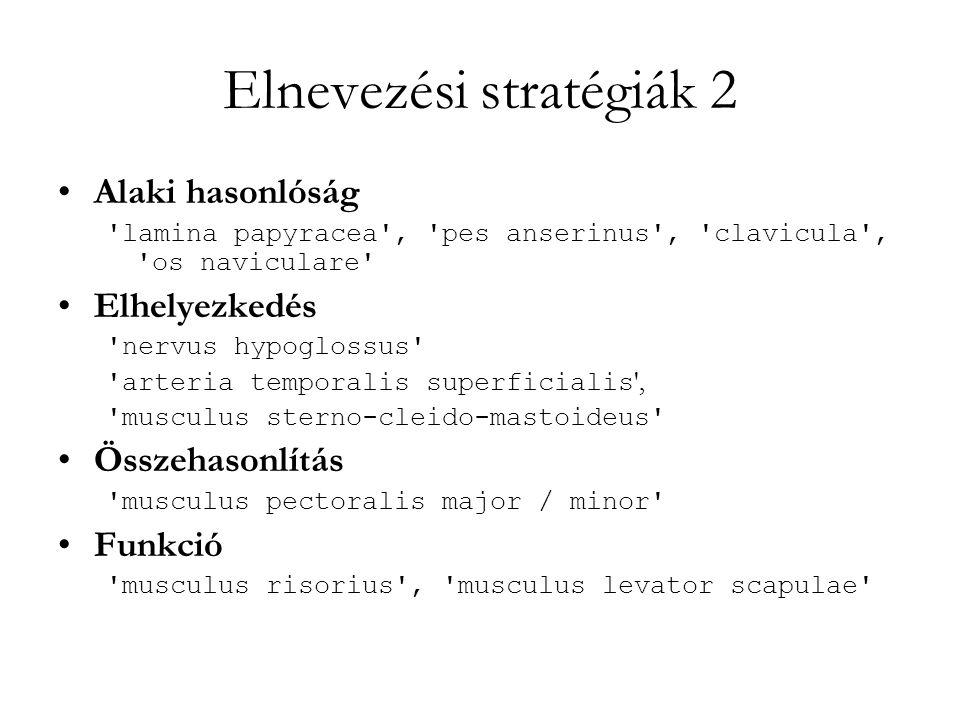 Elnevezési stratégiák 2
