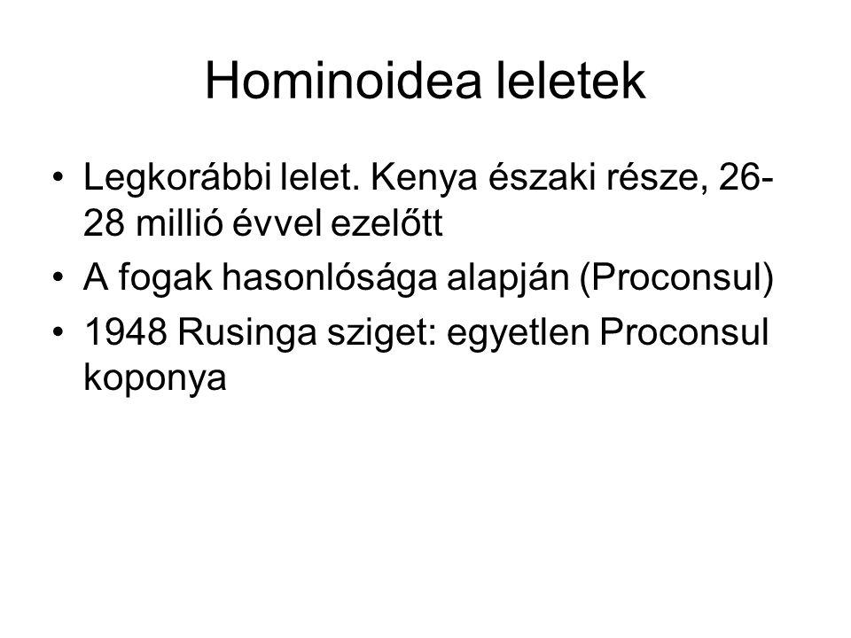 Hominoidea leletek Legkorábbi lelet. Kenya északi része, 26-28 millió évvel ezelőtt. A fogak hasonlósága alapján (Proconsul)