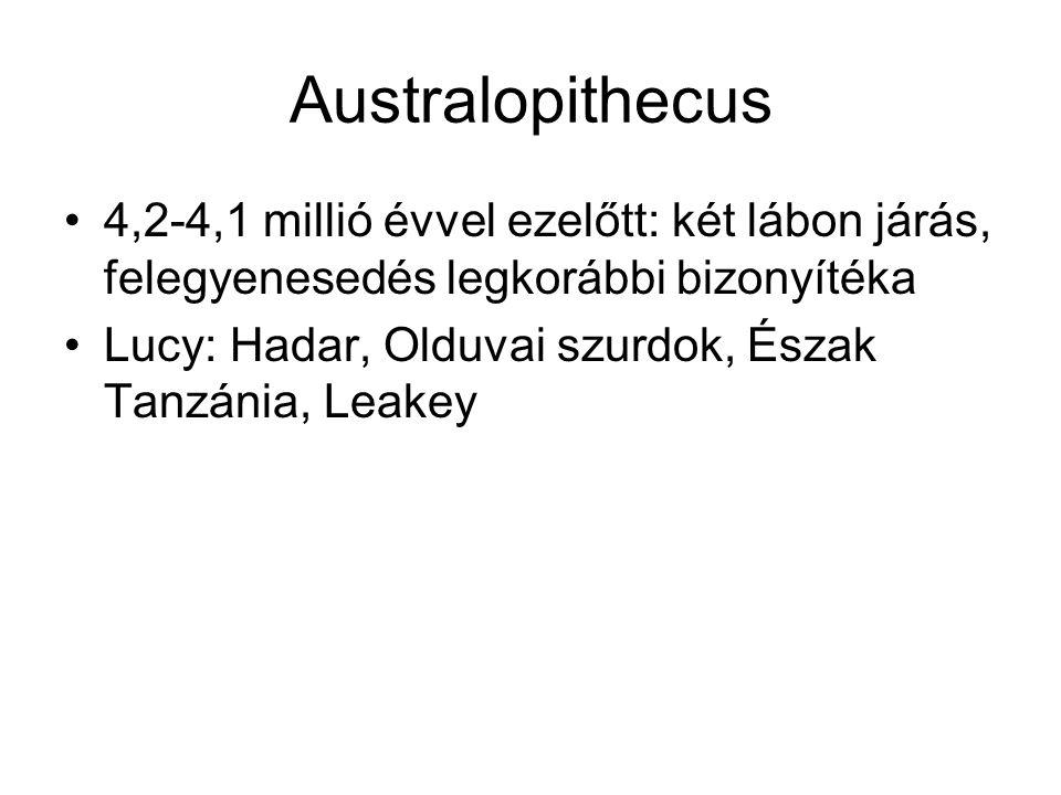 Australopithecus 4,2-4,1 millió évvel ezelőtt: két lábon járás, felegyenesedés legkorábbi bizonyítéka.