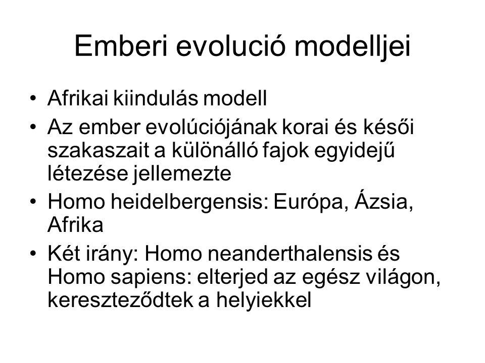 Emberi evolució modelljei