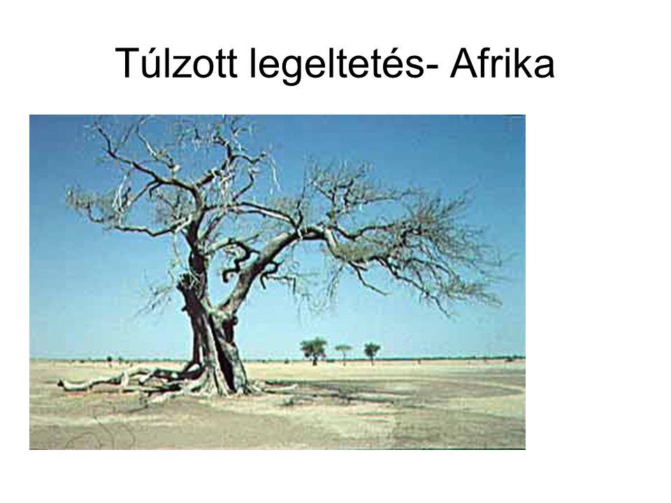 Túlzott legeltetés- Afrika