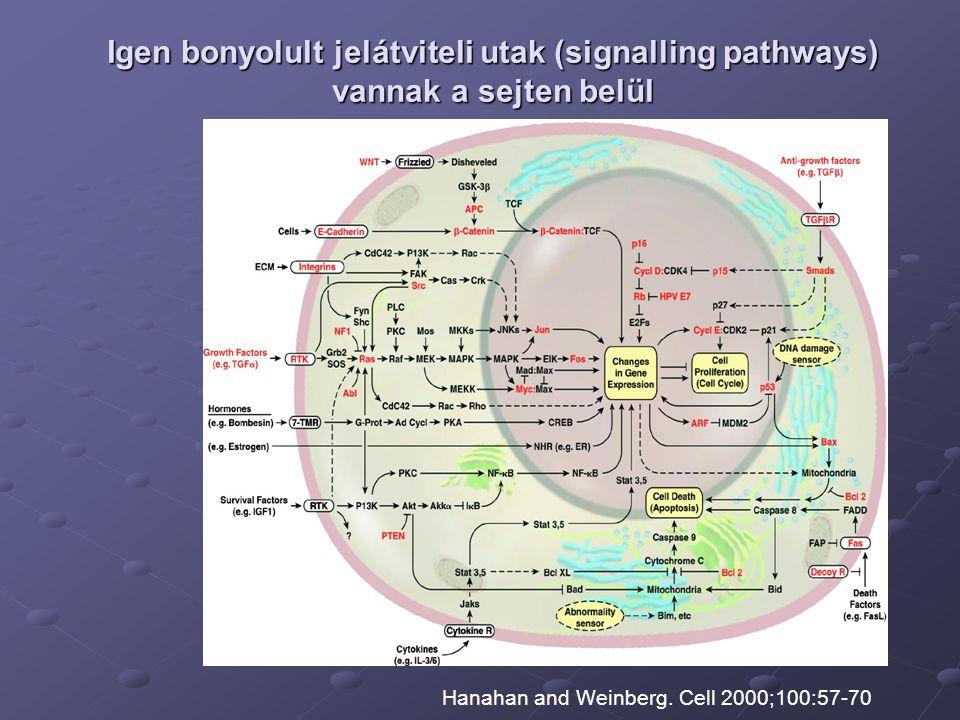 Igen bonyolult jelátviteli utak (signalling pathways) vannak a sejten belül