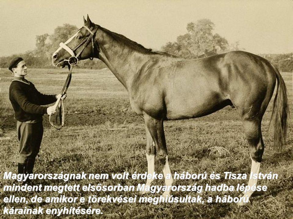 Magyarországnak nem volt érdeke a háború és Tisza István mindent megtett elsősorban Magyarország hadba lépése ellen, de amikor e törekvései meghiúsultak, a háború kárainak enyhítésére.