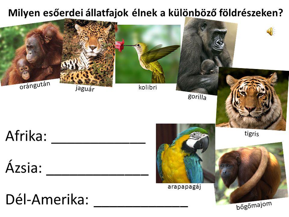 Milyen esőerdei állatfajok élnek a különböző földrészeken