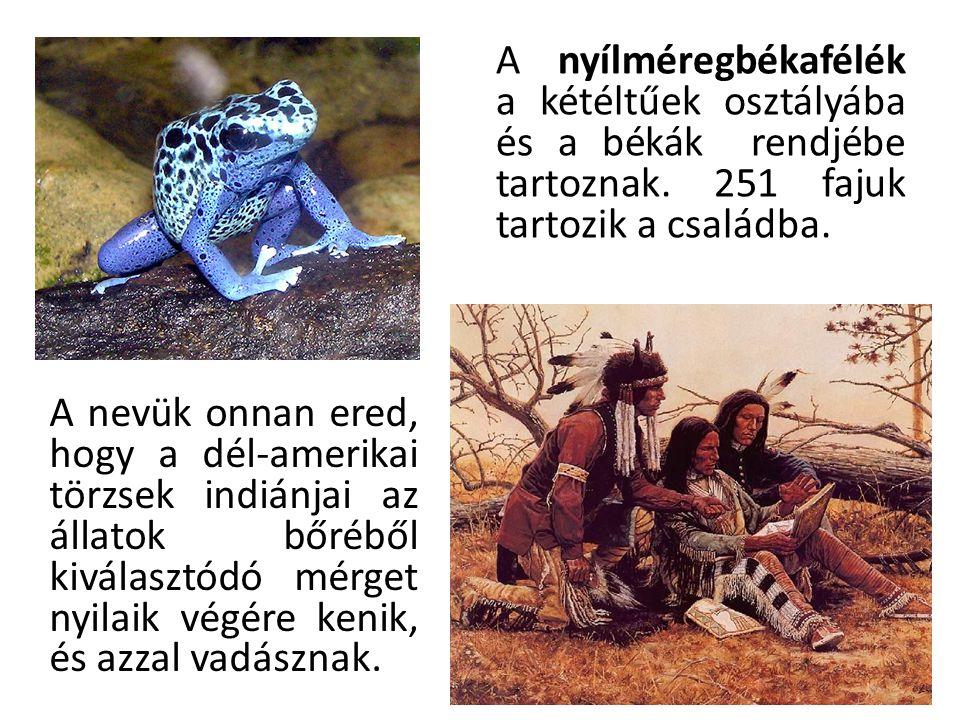 A nyílméregbékafélék a kétéltűek osztályába és a békák rendjébe tartoznak. 251 fajuk tartozik a családba.