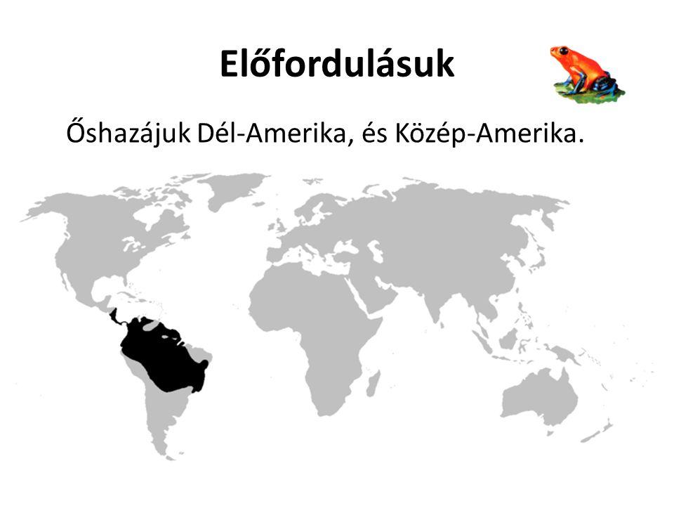 Előfordulásuk Őshazájuk Dél-Amerika, és Közép-Amerika.