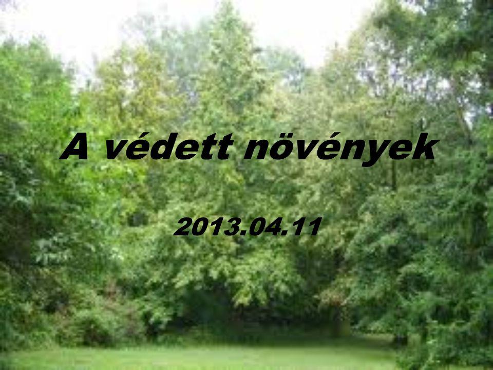 A védett növények 2013.04.11