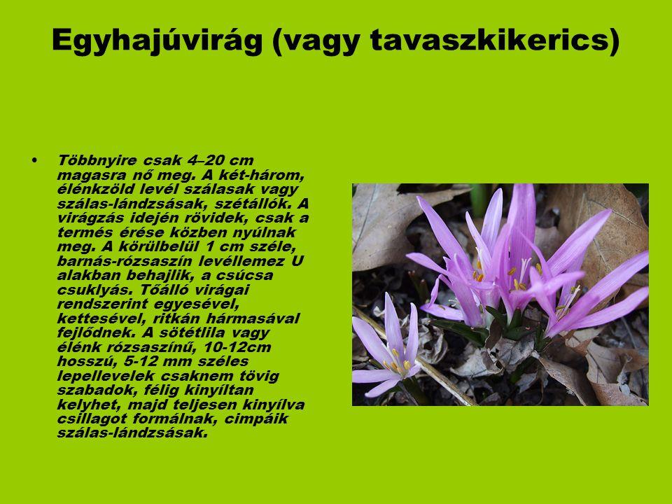 Egyhajúvirág (vagy tavaszkikerics)